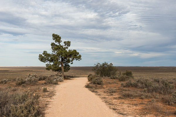 Path to Lookout, Mungo National Park | Catherine Bailey Photography