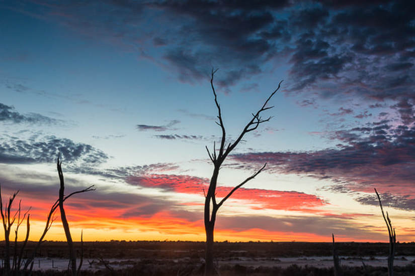 Dead trees against dawn sky at Lake Tyrrell | Catherine Bailey Photography